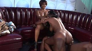 African Queens Subdue King Cock